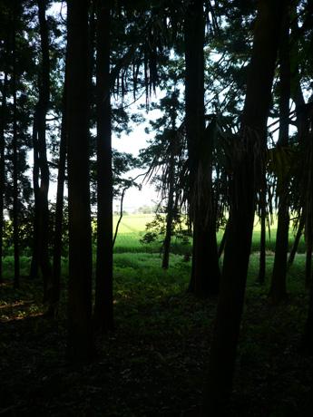 大串貝塚ふれあい公園から見る水田