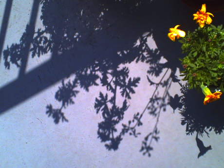 鉢植えの影