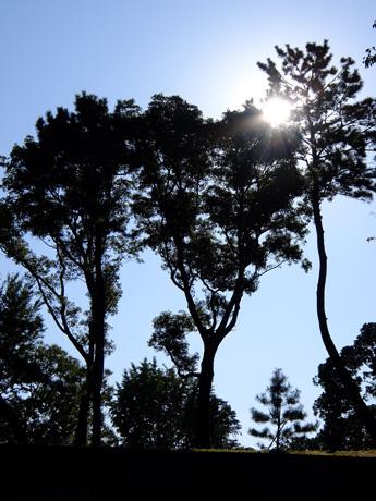 皇居東御苑 木のシルエット