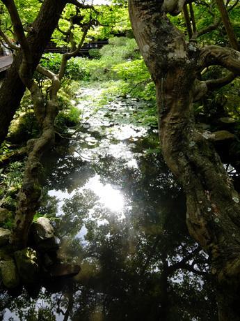 永観堂の庭園