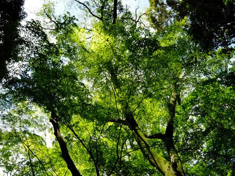 下鴨神社糺の森