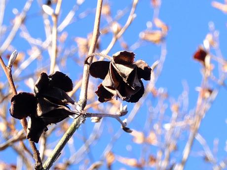枝に残る枯れた花