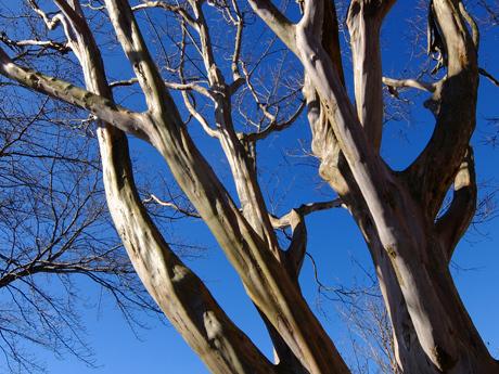 青空と木の幹