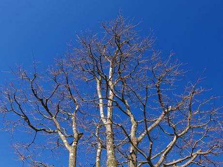 青空と冬の木