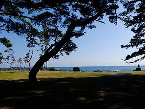 岩井崎の松と海