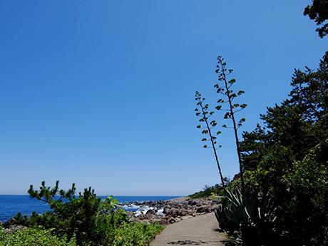 初島の海岸