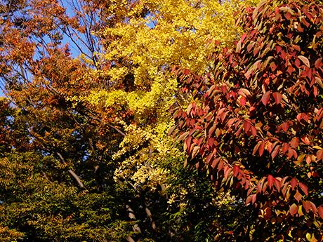 紅葉した公園の木