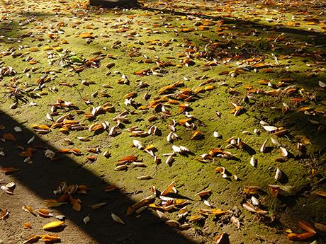 朝日を受ける落ち葉
