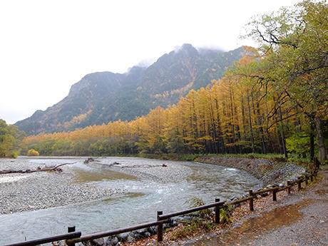 梓川とカラマツの黄葉