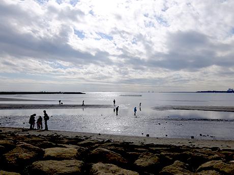 葛西海浜公園の干潟