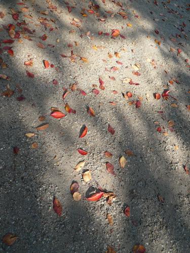木もれ日落葉