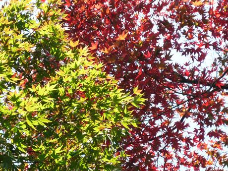 2色の紅葉