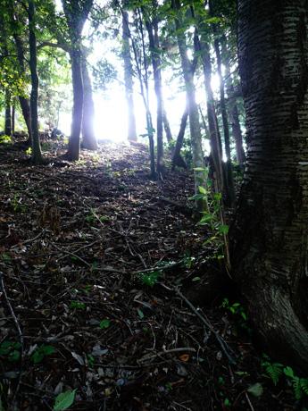 大串貝塚ふれあい公園の木立