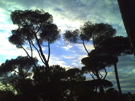 ボルゲーゼ公園の松