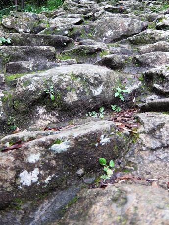 ゴトビキ岩への石段