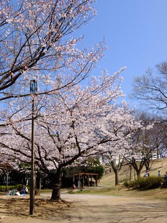 葛西・富士公園の桜