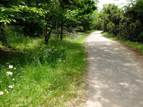 葛西臨海公園鳥類園の小道