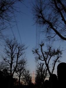 街路樹のシルエットと鉄塔