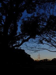 木のシルエットと鉄塔
