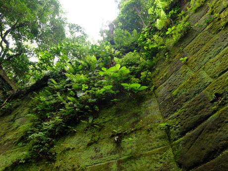 猿島の切通しの石垣