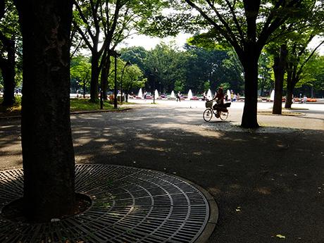 夏の上野公園