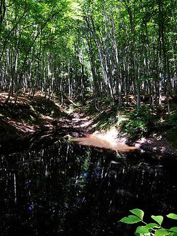 美人林の池