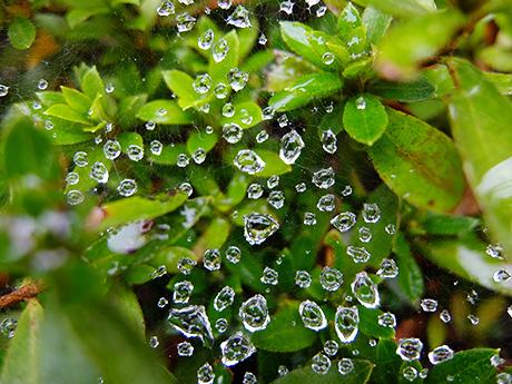 蜘蛛の巣についた水滴