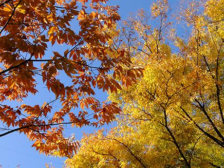 紅葉した木々
