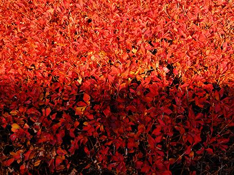 紅葉と朝の光