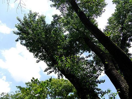 青空と木立