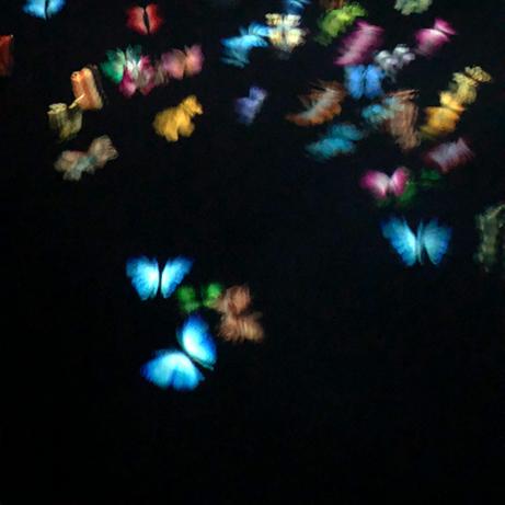デジタルの蝶