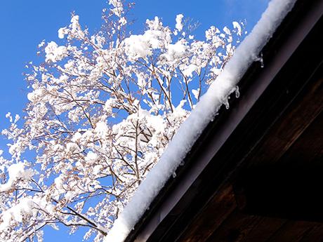 雪の草津ホテル